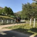 蒜山ホースパーク「乗馬・餌やり体験できるパーク」